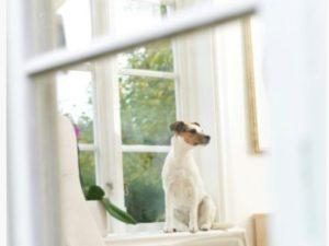 La mejor alarma con mascotas en casa